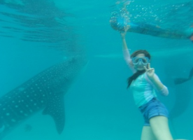 OSLOB--Whale-Shark-Watching